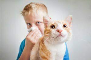 نشانه های آلرژی به حیوانات