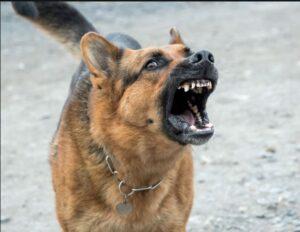 ترس از سگ