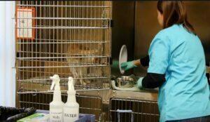 نظافت حیوانات خانگی