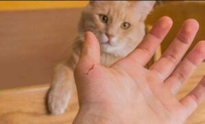 حیوانات خانگی  و خراش